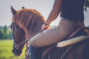 Piotr Kraśko fascynacja końmi